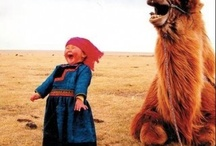 Happy animals fun time