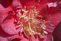 Nature / Plantes, fleurs, matières …