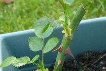 Jardain plantes
