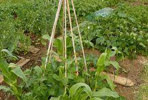Allotment /Garden
