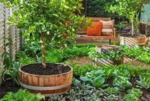 Courtyard Veggie Garden