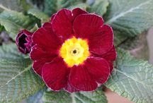Frensham Garden Centre Flowers and Plants / Images from our Surrey based garden centre.