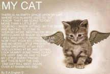 Willow's Journey / My new kitty's journey