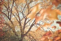 Mood - Oh Autumn