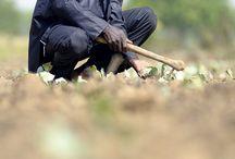 Première Agence de Microfinance Burkina Faso (PAMF-BF) / Première Agence de Microfinance Burkina Faso est une institution de microfinance qui a pour activité principale la collecte de l'épargne et l'octroi de crédits sur le territoire Burkinabè, afin de concourir à une meilleure satisfaction des besoins financiers des populations à revenu modeste dans un cadre renforcé de protection de leurs membres ou usagers. ©Didier GENTILHOMME
