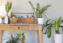 Növények bentre