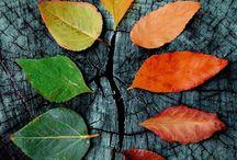 Itt van az ősz......