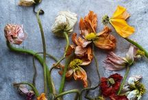 florilegia inspiration / Seeds, flowers, prints and silouettes