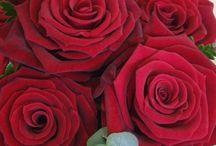 Jessica's January wedding / Red rose Snow white
