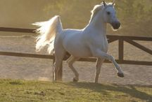 Animals - horses in particular
