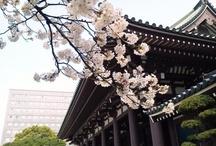 Spring | FUKUOKA / by Awesome FUKUOKA