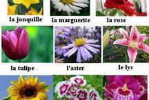 fleurs fr.