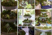 Gardening / by Wanda Price