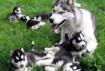 #Puppies On #Lawns / Some of the cutest #dogs we've ever seen!