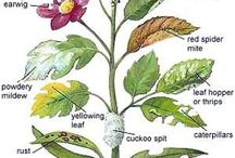 škůdci zahrady