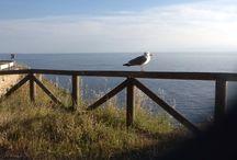 Elba / Vi presento la mia isola, i suoi paesaggi, le spiagge e i tramonti sul mare. Elba, isola dei contrasti: ruvida e morbida allo stesso tempo, come chi ci vive. Qualche volta puoi persino detestarla, ma finisci sempre per esserne riconquistato.