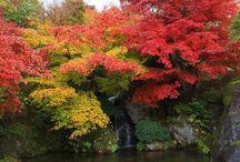 Autumn leaves =紅葉