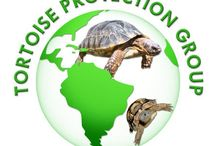 Tortoise Keeping / by Michyle Babb