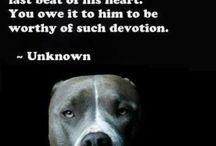 DOGS + / by Rhonda Harris