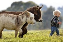 állatok és gyerekek-Animals and children