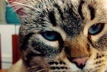 Gato / Gatito beni