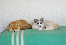 furry friends. / by Tori Hendrix