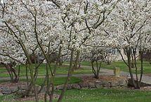 Garden / Tree for centre circle