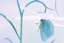 Crystal Blues / Blue Blue Blue