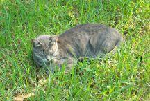 Gatos en nuestro camino / Mascotas