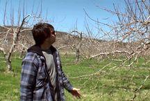 Vidéos Vergers Petit et fils / Vidéos une année aux Vergers #Vergerspetit #vergers #pommes #agricultures #local #quebec #fruits #local #monteregie #montsthilaire