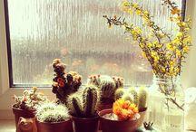 Cactus / by Ale Márquez