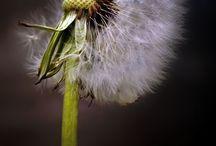 Still-Life Flower Ideas