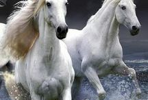 drømme hester ❤