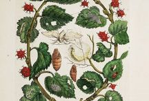 Nature Journaling and Botanical Illustrations