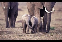 Elephants :) / by Kelsey Browning