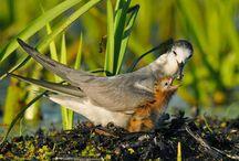 Ptaki - Birds
