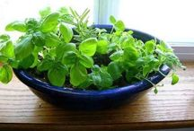 Herbs / by Vickie Johnson