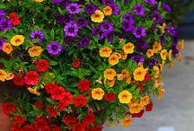 Flores en  matera