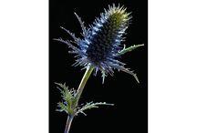 Flower power in photos