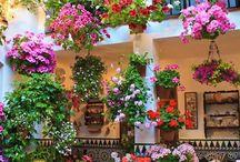 virágos udvarok