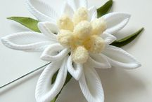 FLORES EDELWEISS