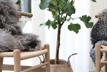 plants ::: kasvit