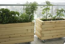 Victory Gardens Custom: Apartment Gardens / by Victory Gardens