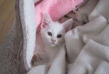 Kandy / my cat