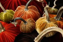 Fall Decorating / by Christy Sterner Ward