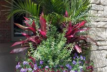 Container Garden Inspiration / Pots in the landscape provide so much interest!