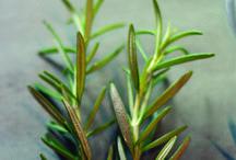 Rooting herbs