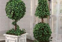 Topiary Ideas