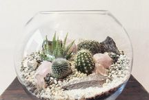 Succulent pot ideas