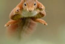 squirrel / by MegaCalendars.com